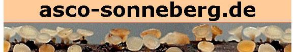 Ascomyceten aus Sonneberg
