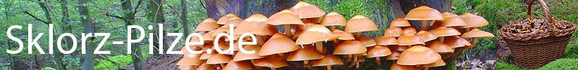 Sklorz-Pilze