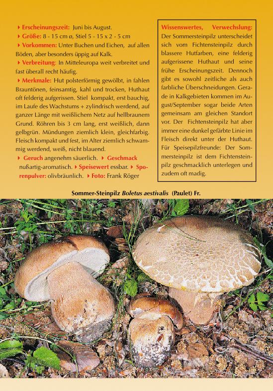 liste der pilzarten die im kalender 2006 pilze in kalkbuchen ldern abgebildet waren. Black Bedroom Furniture Sets. Home Design Ideas